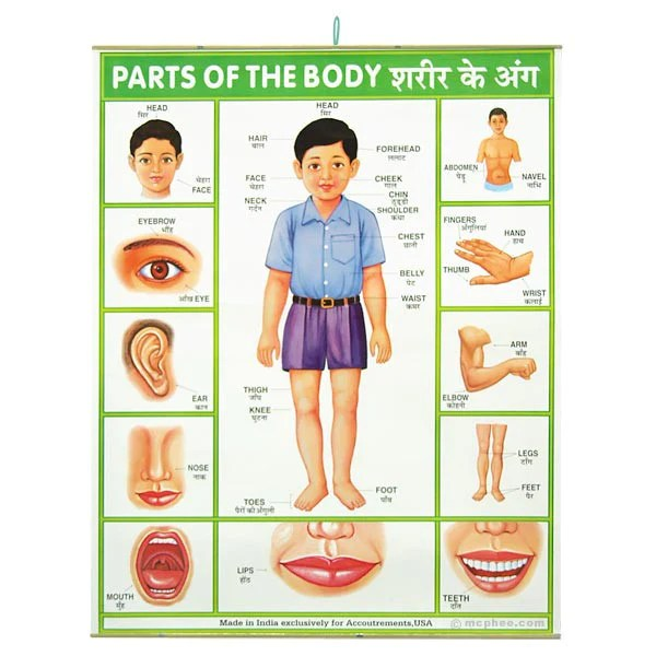 Parts Of The Body Indian Poster Archie McPhee