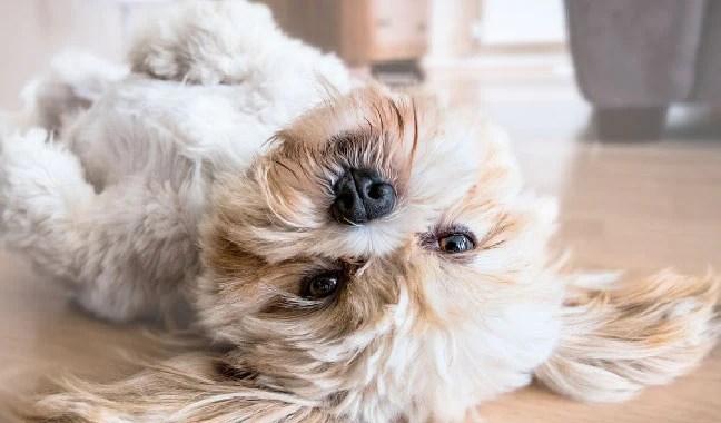 Pet Camera shot at home
