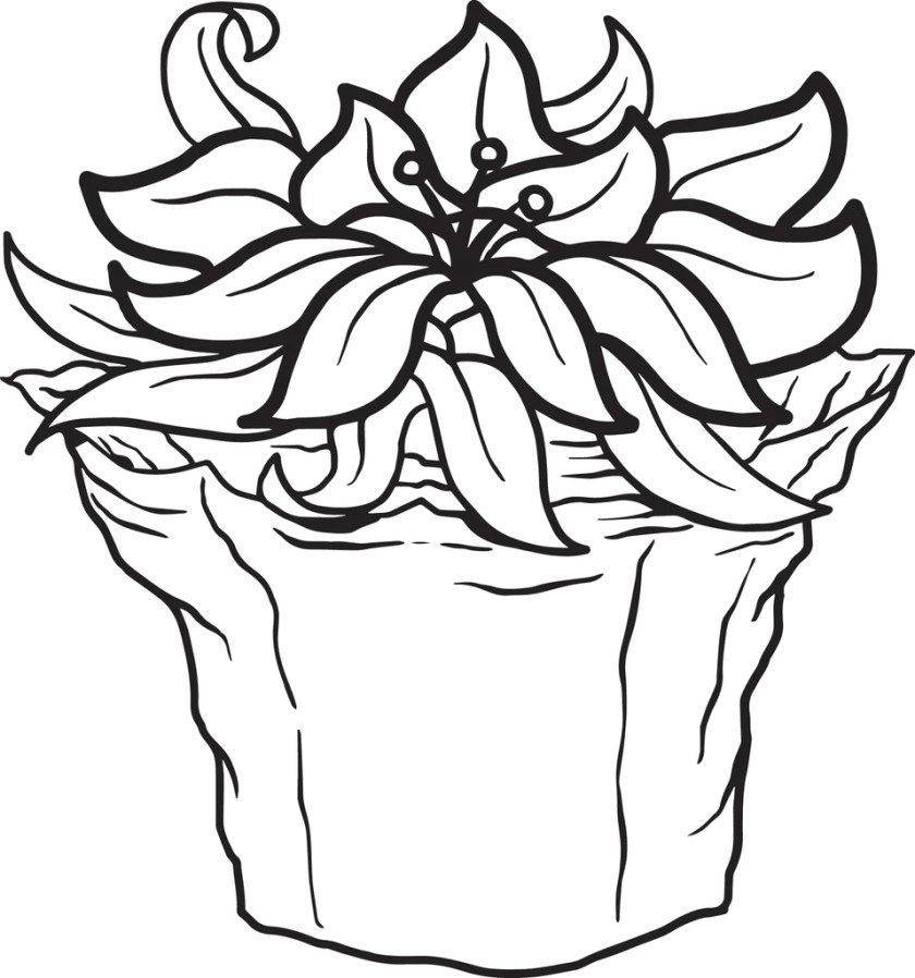 free printable poinsettia coloring page for kids – supplyme
