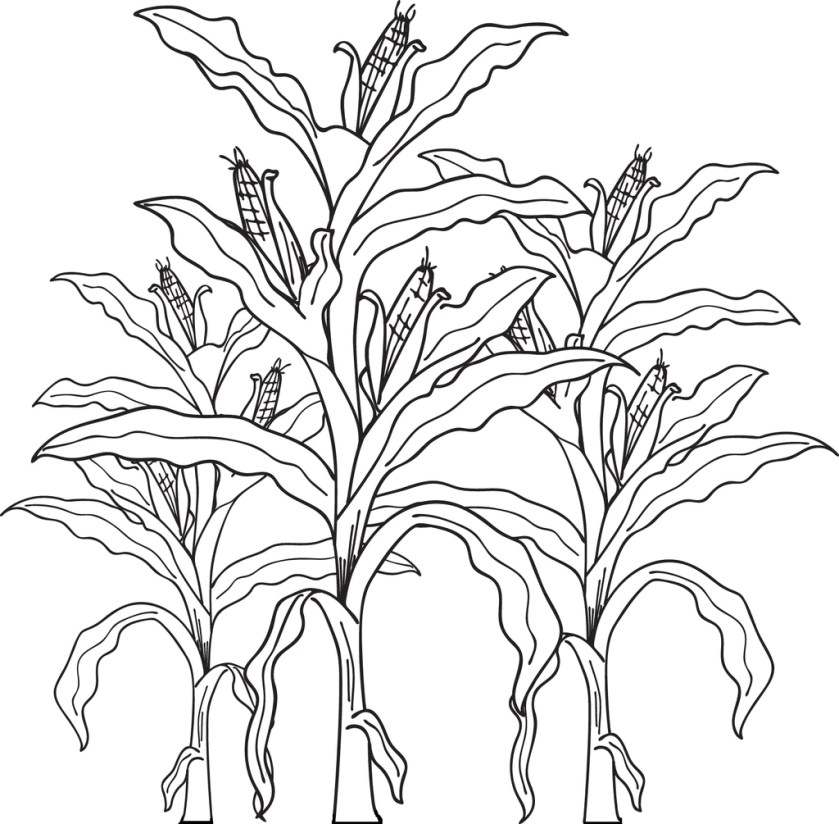 free printable corn stalks fall coloring page for kids