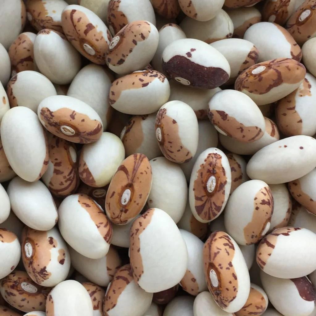 pdf phaseolus bean improvement in tanzania 19592005 - 736×736