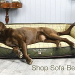 Dog Beds George Barclay The Home Of Luxury Orthopaedic Dog Beds