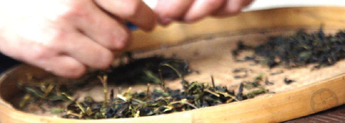 The 6 Steps of Tea Processing – Red Blossom Tea Company