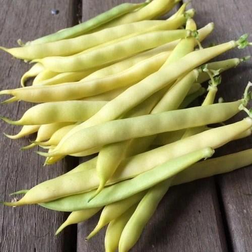 Climbing Bean Australian Butter Rare Boondie Seeds
