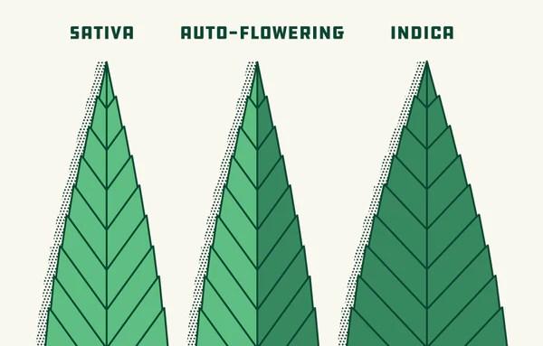 Best Weed Strain Indica Sativa Hybrid