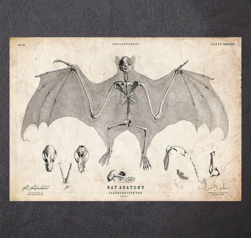 Bat anatomy art print - Codex Anatomicus