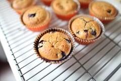 Quick bread muffins