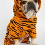 Tiger King Dog Costume Club Huey