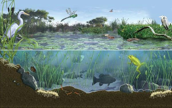 Aquatic Plants Fish Ponds