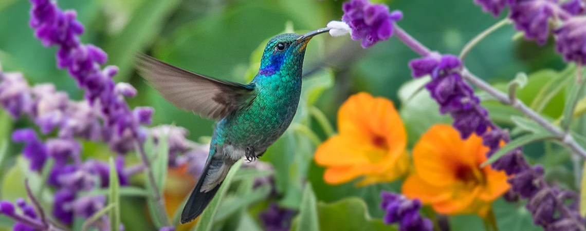 The Best Trees Plants To Attract Hummingbirds Roger S Gardens