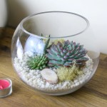 Gorgeous Glass Globe Succulent Terrarium To Buy In The Uk The Art Of Succulents