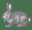 Vegan Bunny