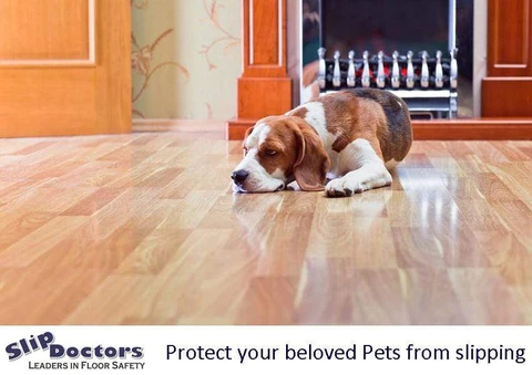 How To Stop Dog Slipping Slipdoctors Pet Friendly Non Slip Products | Dog Slipping On Wood Stairs | Steps | Hardwood Floors | Self Adhering | Hardwood | Puppy Treads