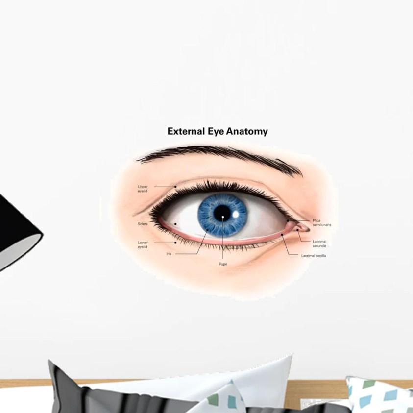 External Anatomy Human Eye Wall Decal Design 1 ...