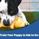 Potty Training Pads How To Train Your Puppy To Ask To Go Outside Mednet Direct