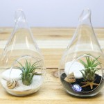 Wholesale Teardrop Terrarium With Tillandsia Air Plants And Black Sand Air Plant Shop