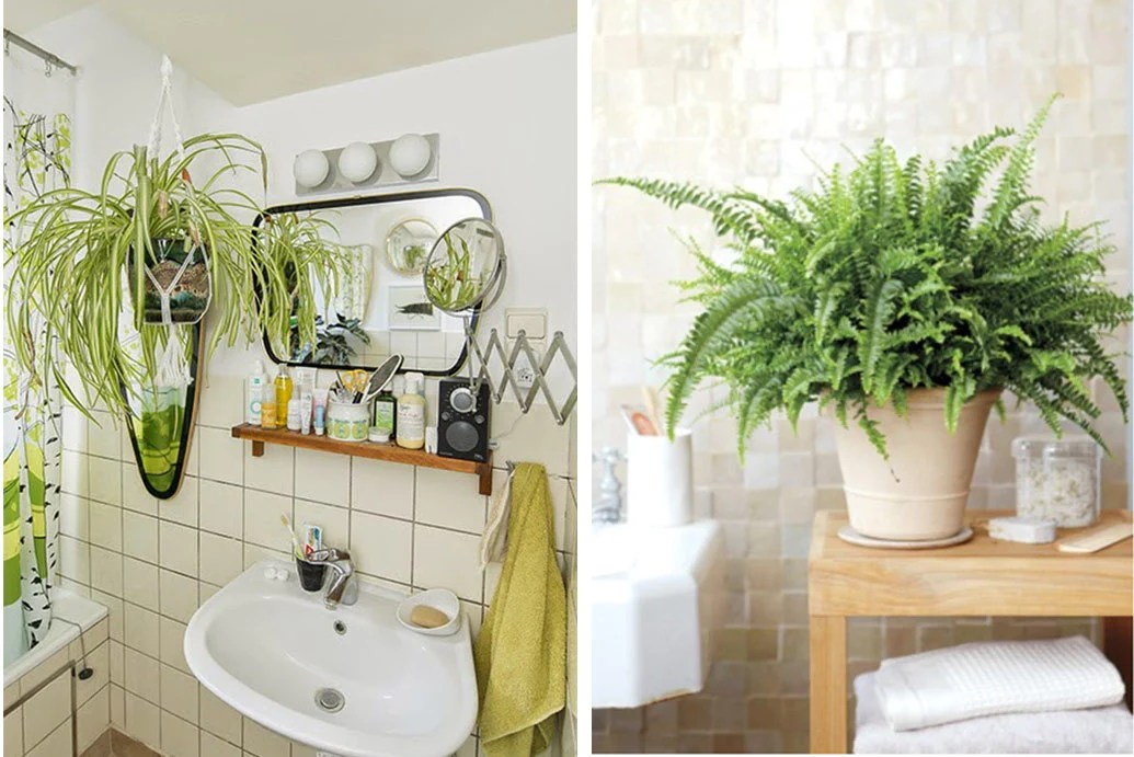 Plants That Will Thrive In Your Bathroom Art Terrarium