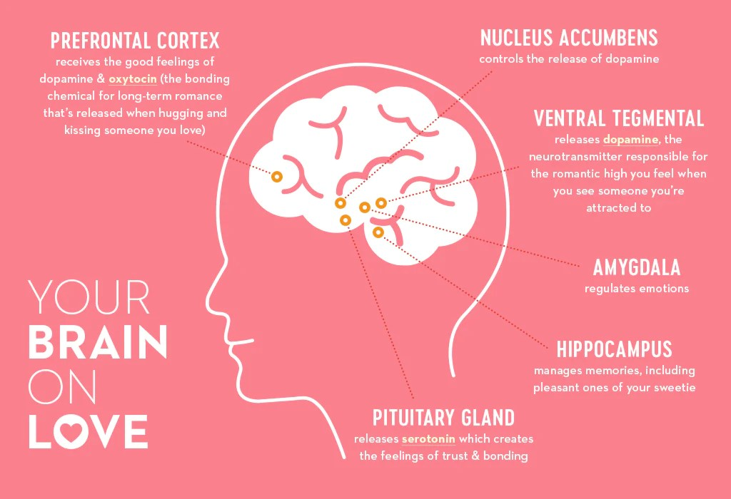 Otak dan Cinta