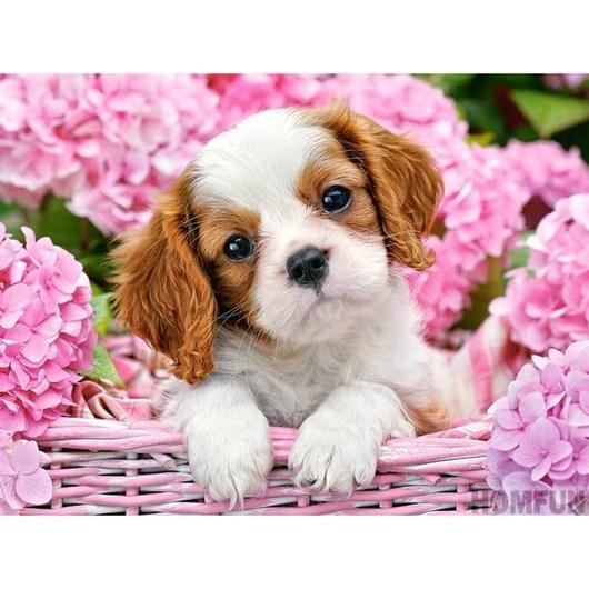 Cute Little Puppy Diamond Painting Diamondxpres