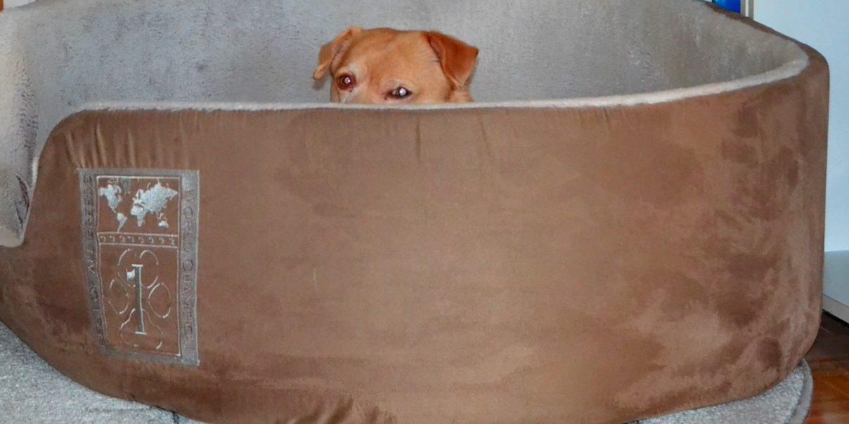 Grasmilben Beim Hund Erkennen Und Vorbeugen Berlinde