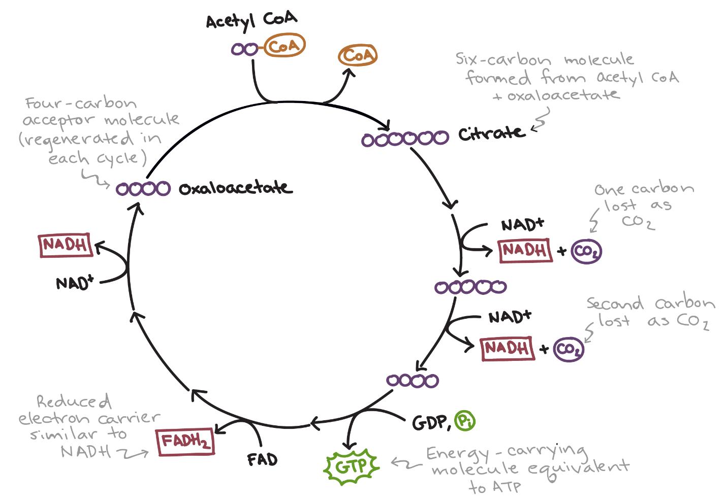 Biology Mnemonics Neet Aiims Jipmer