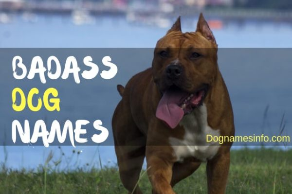 Badass Dog Names 2019 - Famous Names for Tough Male and ...