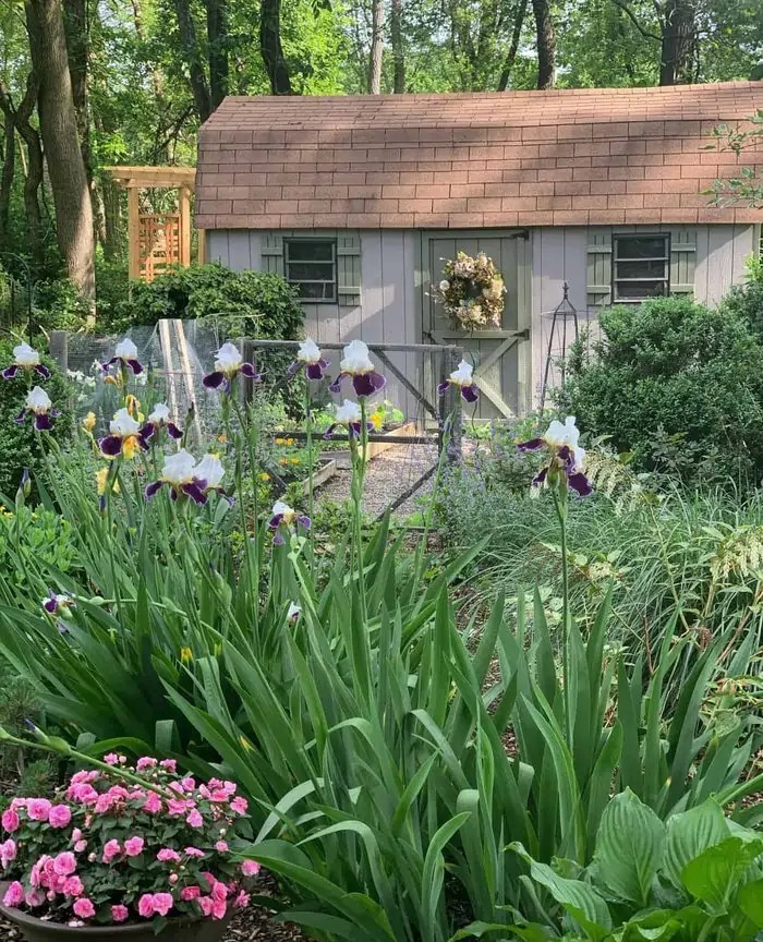 Colorful Garden at the Garden Shed