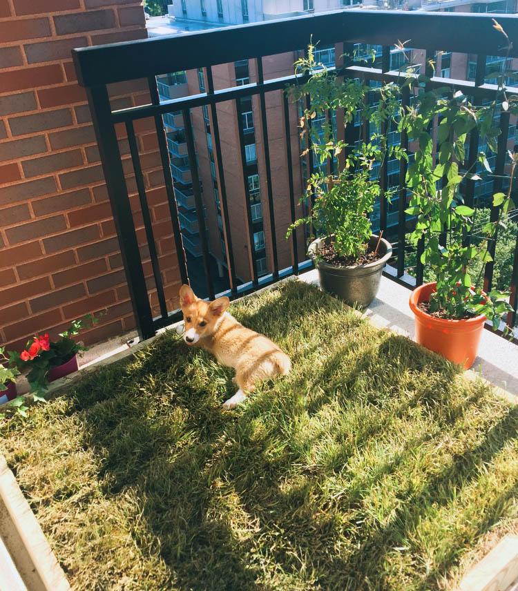 14 diy dog porch potty grass box