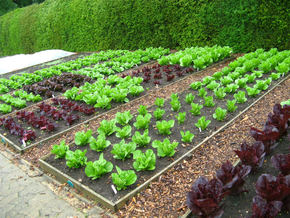7 Vegetable Garden Layout Ideas To Grow More Food In Less Space