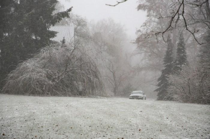 Vse pokrylo tonkim sloem snega.