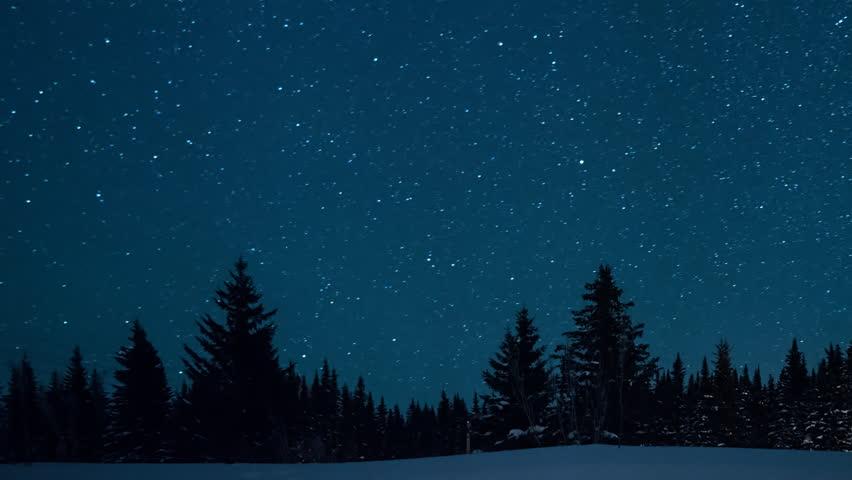 Moonlight Winter Night Trees Starry