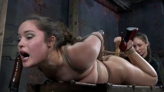 Image: Hogtied pallid brunette Charlotte Vale lies on_the wooden old chest