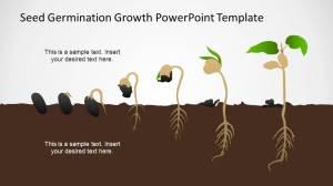 Germination Process Seed to Plant Timeline  SlideModel