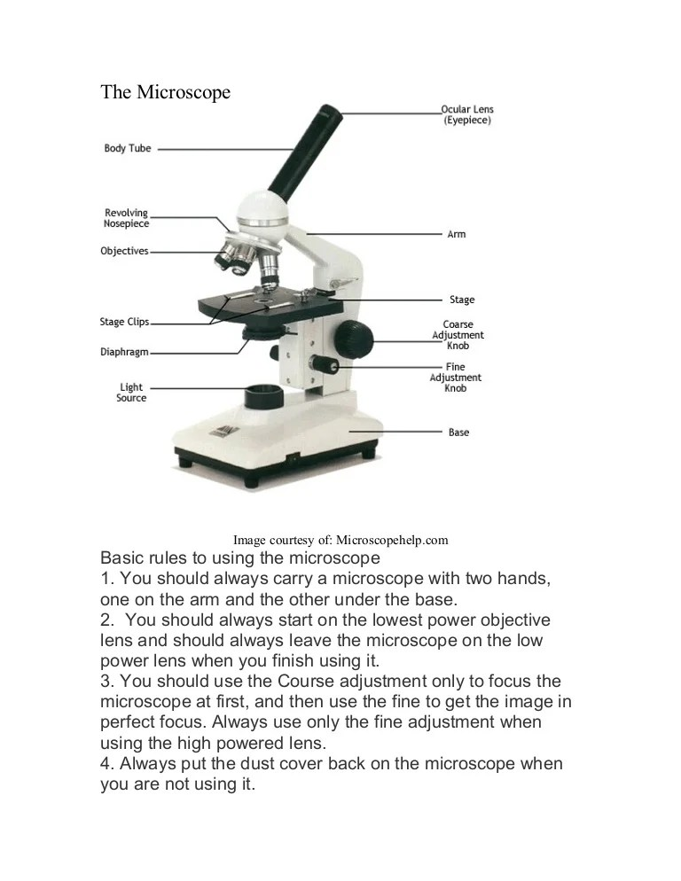 Microscope labeled diagram