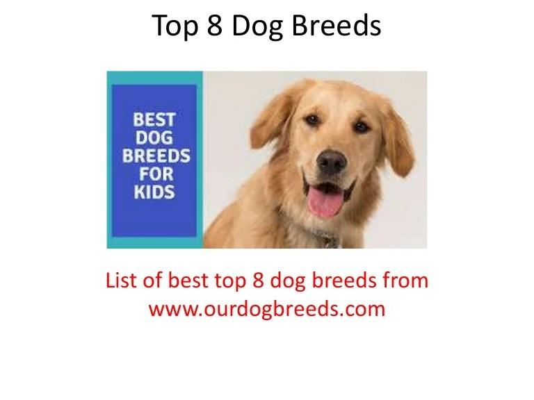 Top 8 Dog Breeds List