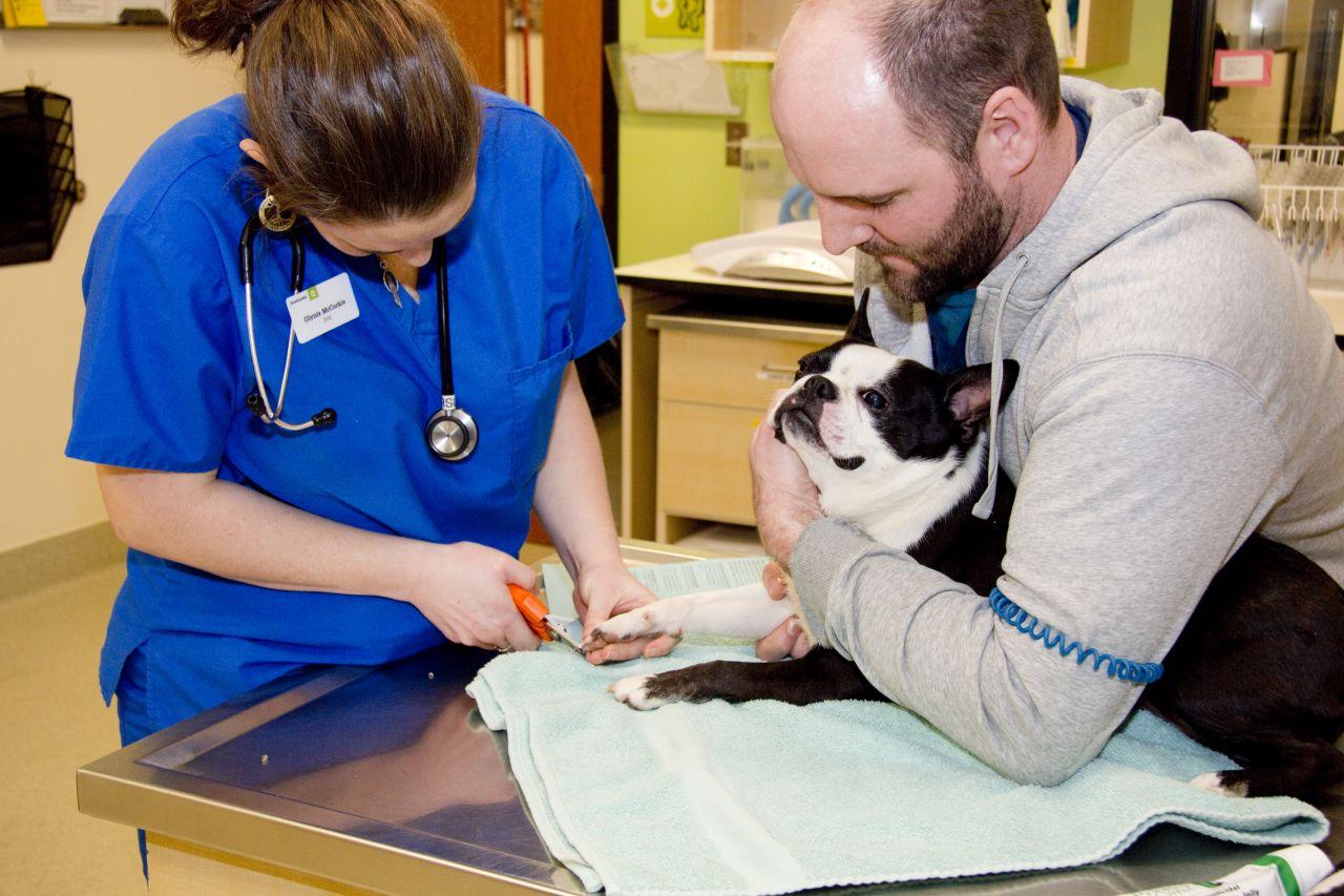 Dovelewis Animal Emergency Hospital