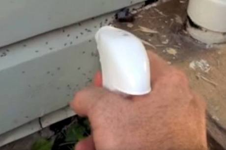 Carpenter Ant Spray in Use