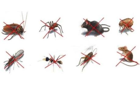 Pests Types List