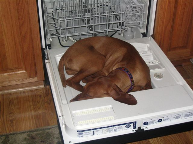 http://happyplace.someecards.com/dogs/15-photos-that-prove-dogs-can-fall-asleep-anywhere/?page=2
