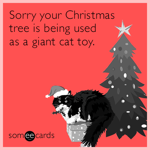 Sorry your Christmas tree is being used as a giant cat toy.