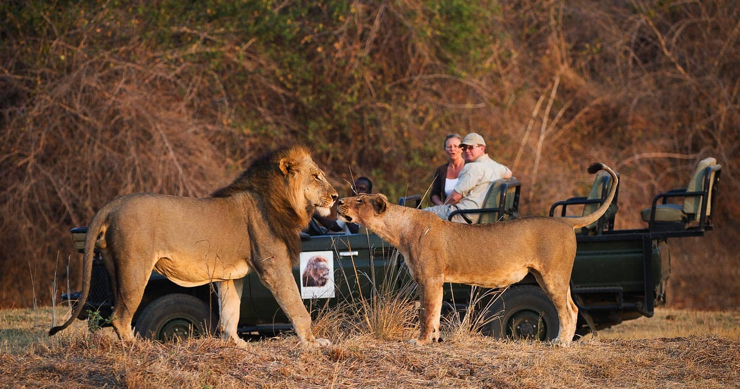 Image result for South Luangwa National Park Zambia