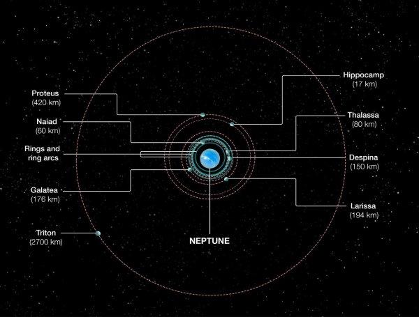 Orbits of Neptune's inner moons | ESA/Hubble