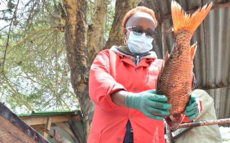 County in plan to resume fish ban in Lake Naivasha as catch drops