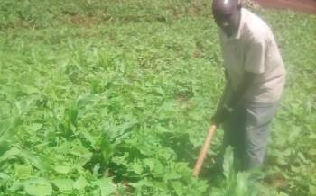 Hunger stricken areas turn into food baskets after free certified seeds