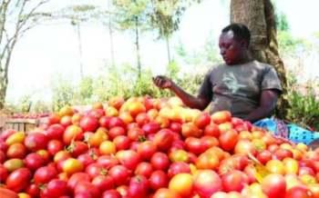 Laikipia farmers sleep in farms to deter jumbos