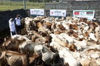 2,000 families get Eid Al-Adha donations from Turkish embassy