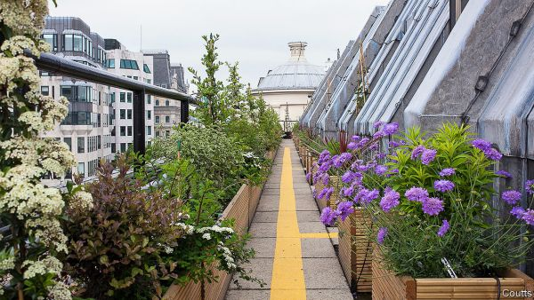 rooftop garden London's rooftop gardens are a breath of fresh air