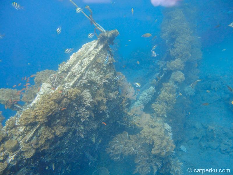 Japanese Shipwreck point adalah favorit saya ketika snorkeling di Amed