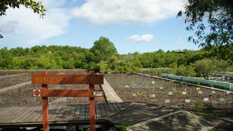 Mangrove Arboretum