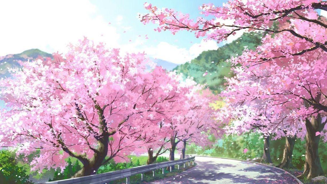 Beautiful Japanese Cherry Blossom Wallpaper